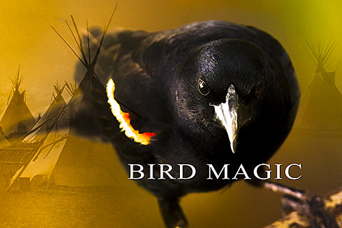Tales from the Red-winged Blackbird